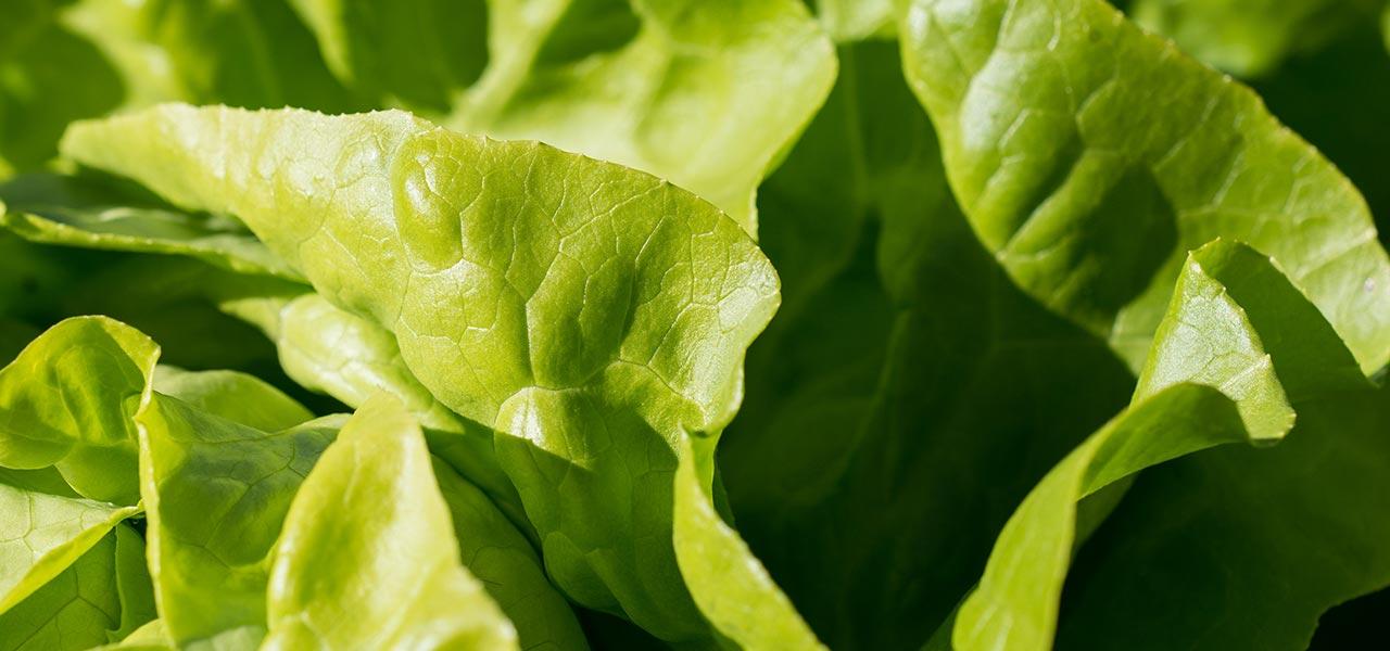 Salata Image 1