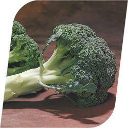 sjeme brokule - Chevalier